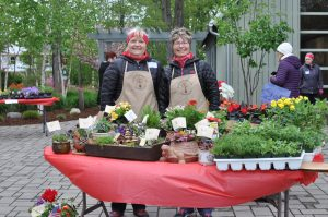 Our plant sale chairs, Betsy and Char
